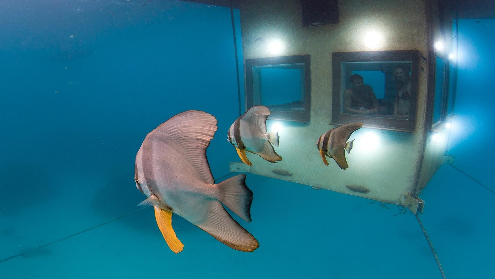 Outside the Underwater Room at Manta Resort-Pemba Island, Zanzibar