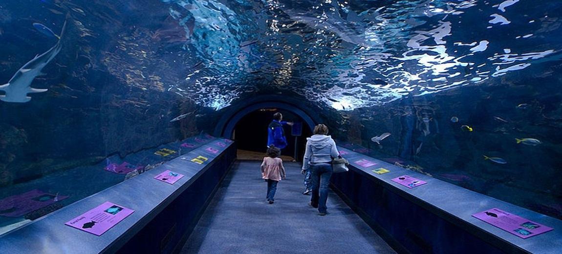 Shedd Aquarium Chicago Widest