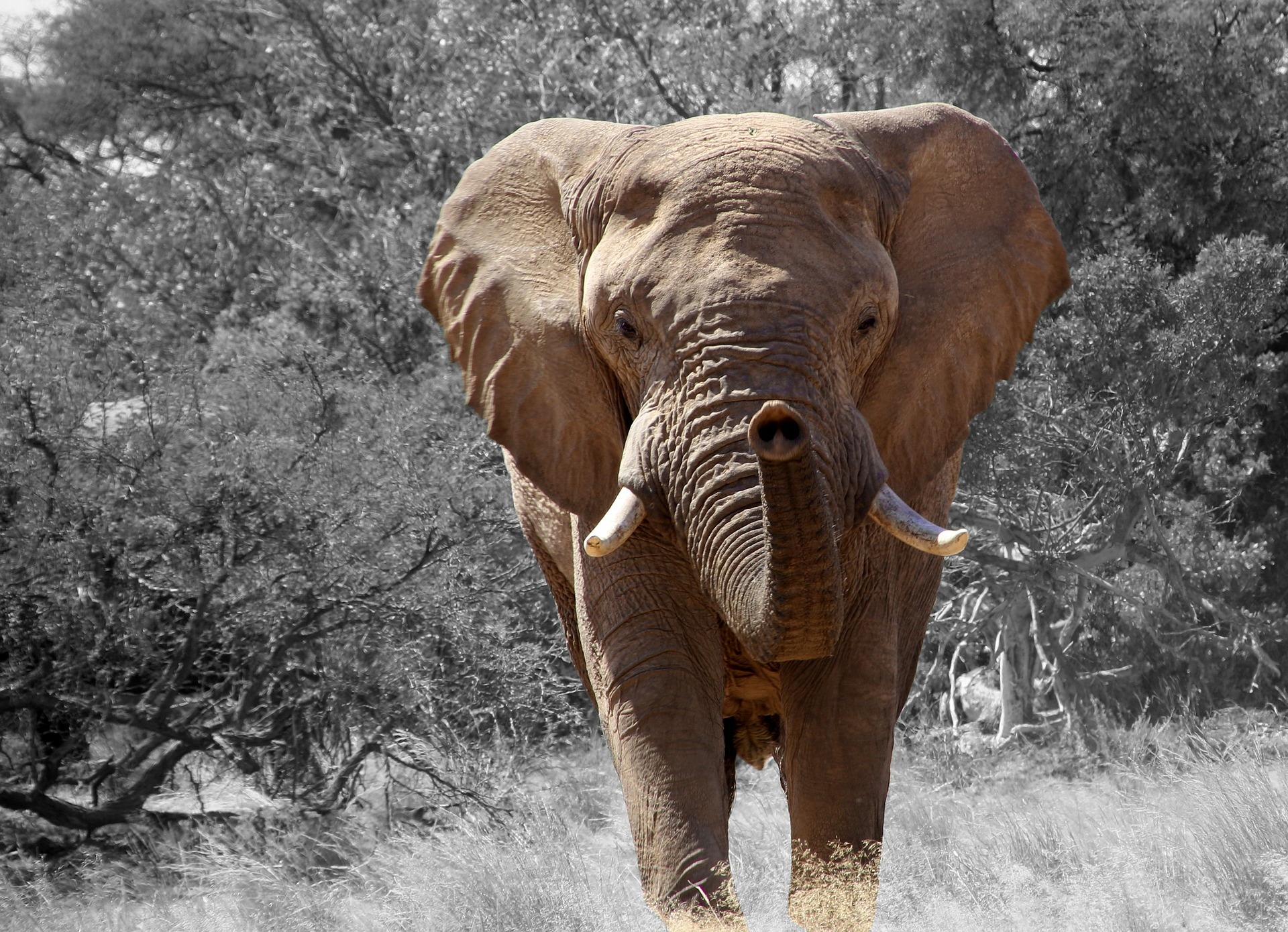An elephant in Namibia