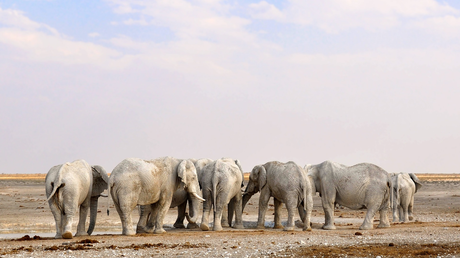 Herd of elephants in Namibia