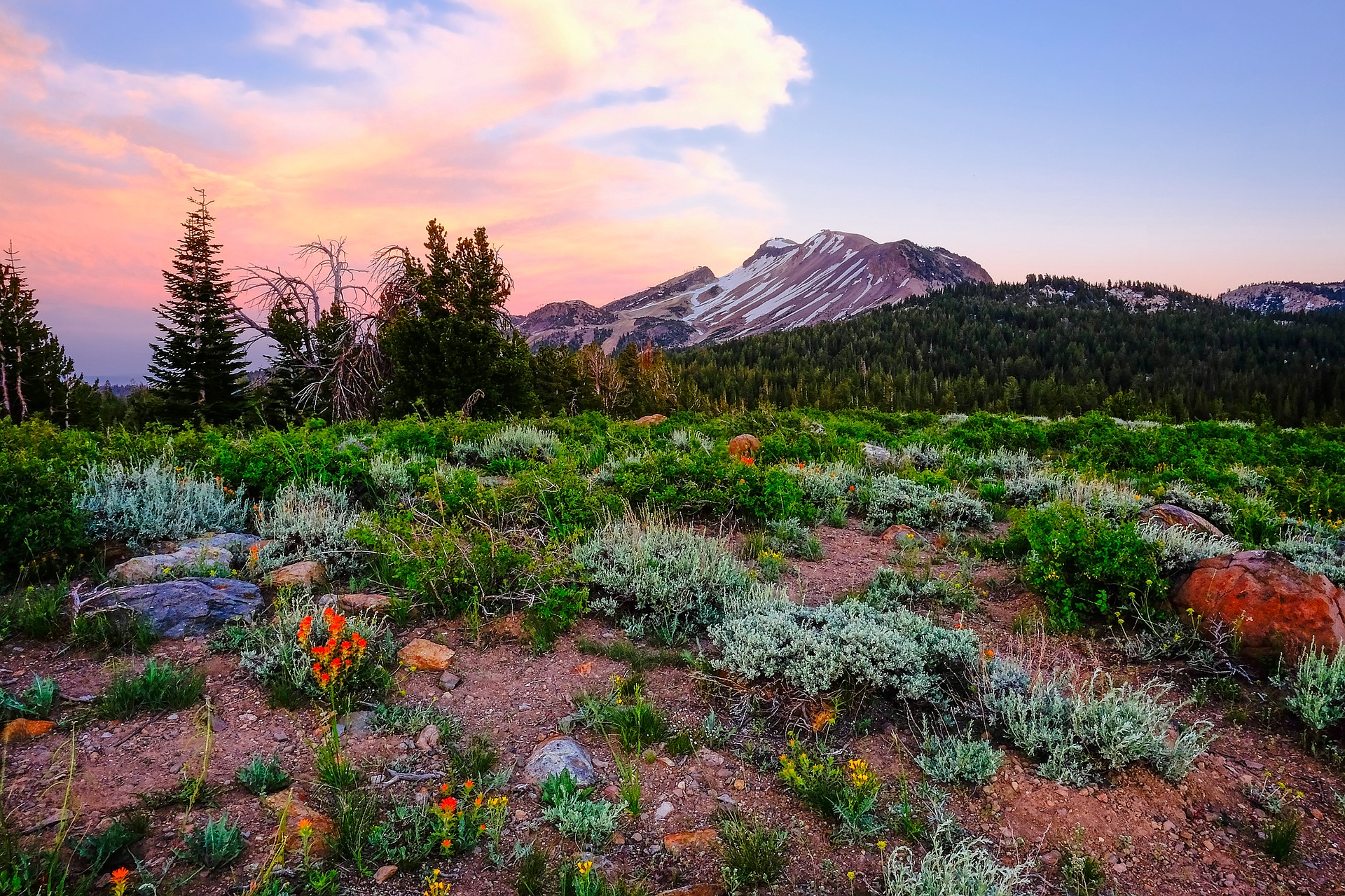 Flowers at Yosemite National Park in California, USA