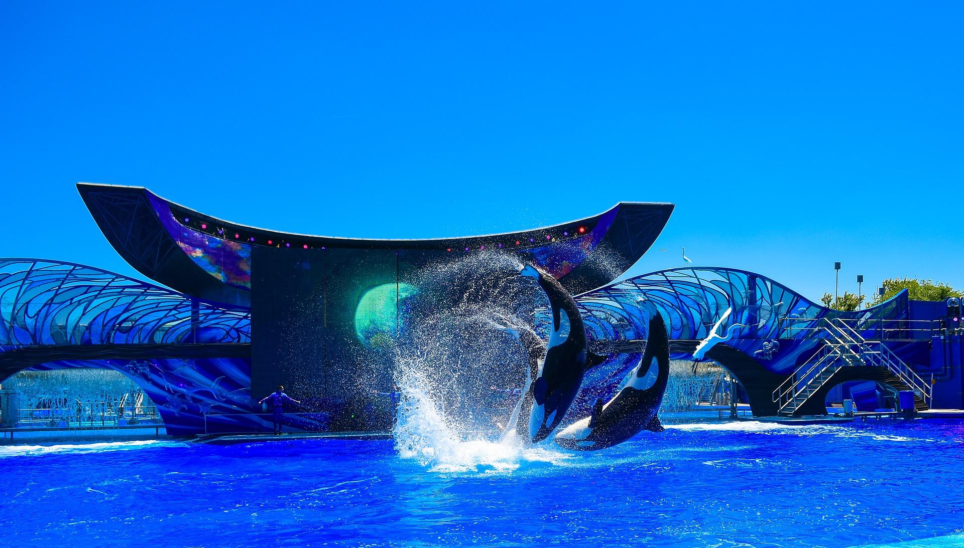 Aquatic attraction in Orlando
