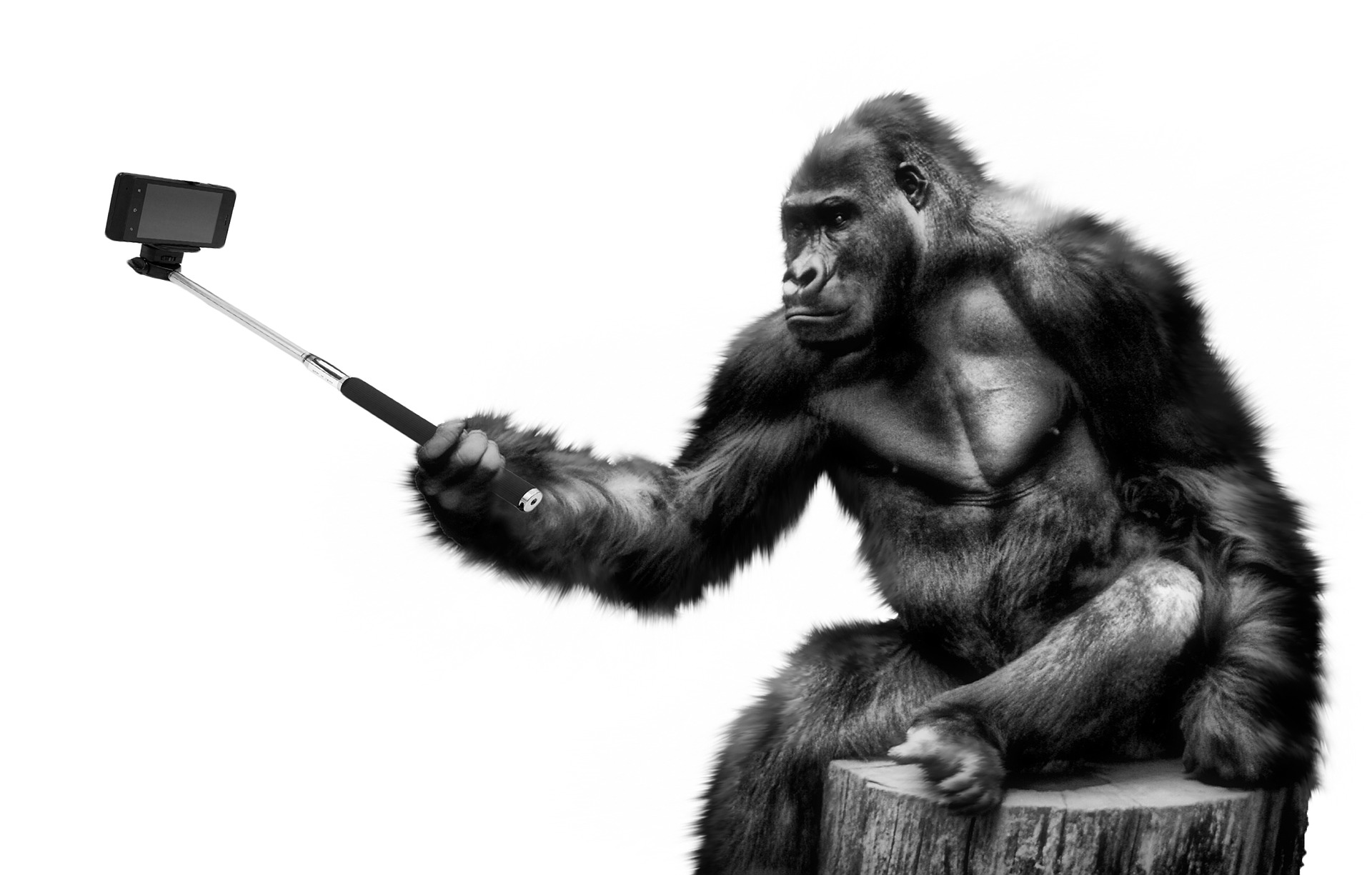 Ape taking photo with selfie stick
