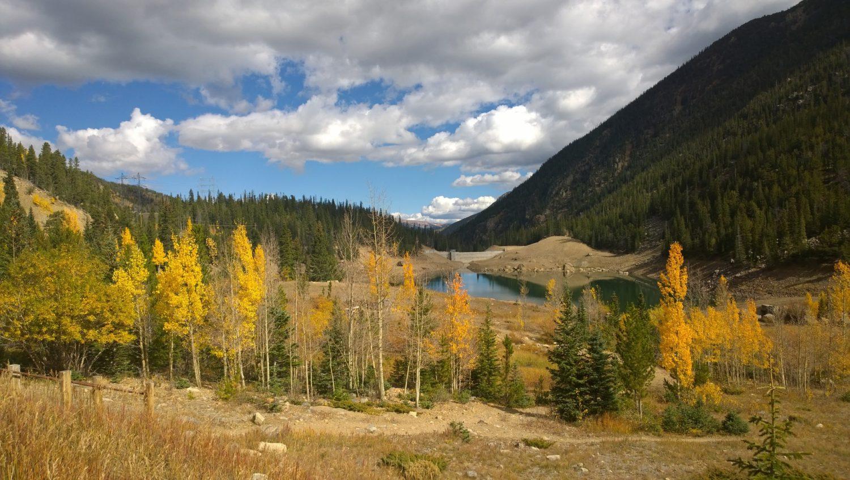 Aspen trees near Denver, Colorado