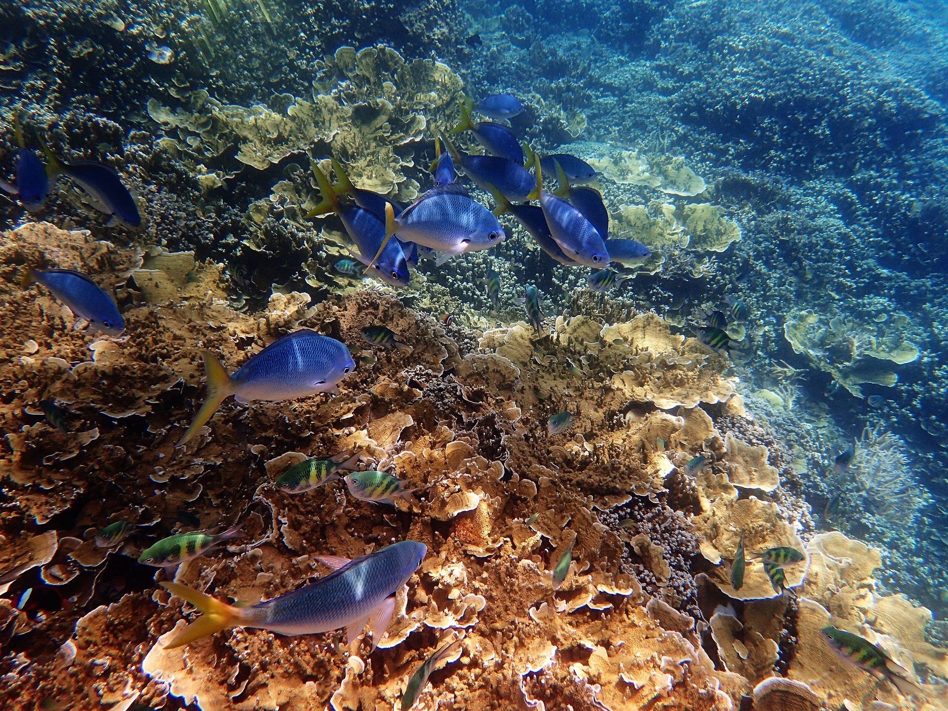 Great Barrier Reef in Queensland, Australia