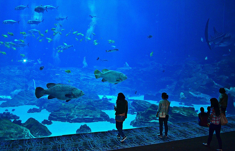 The Georgia Aquarium, Atlanta