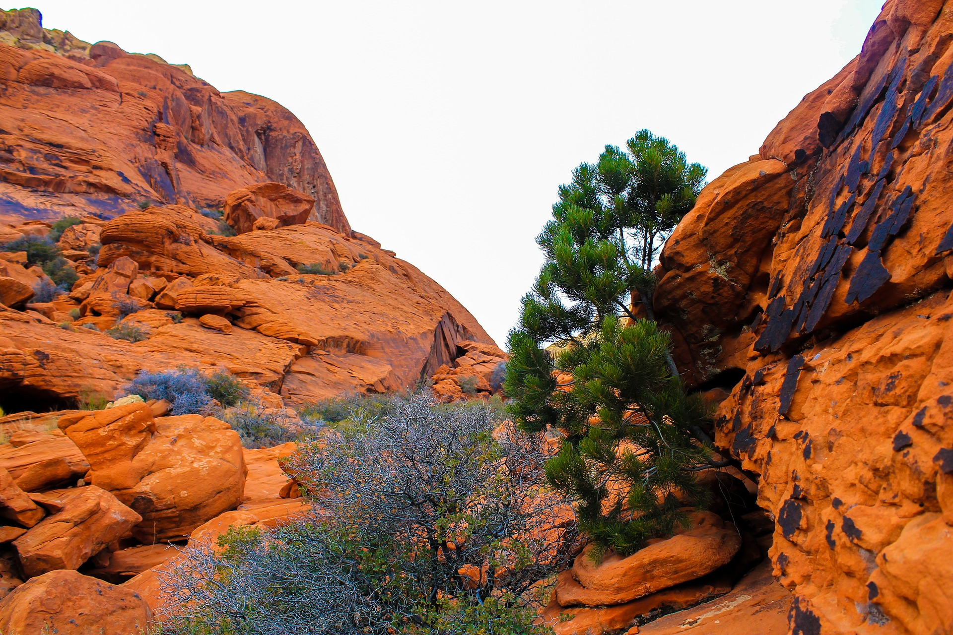 The Red Rock Canyon National Conservation Area, Near Las Vegas