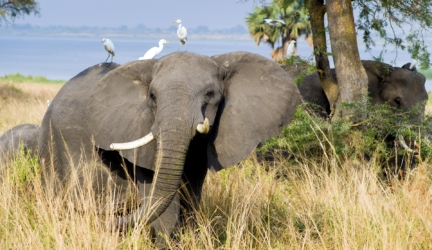 The Top 10 Countries in the World to View Wildlife