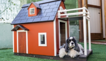 20 Amazing Best Selling Dog Houses