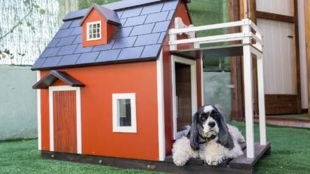 20 Amazing Best Selling Dog Houses